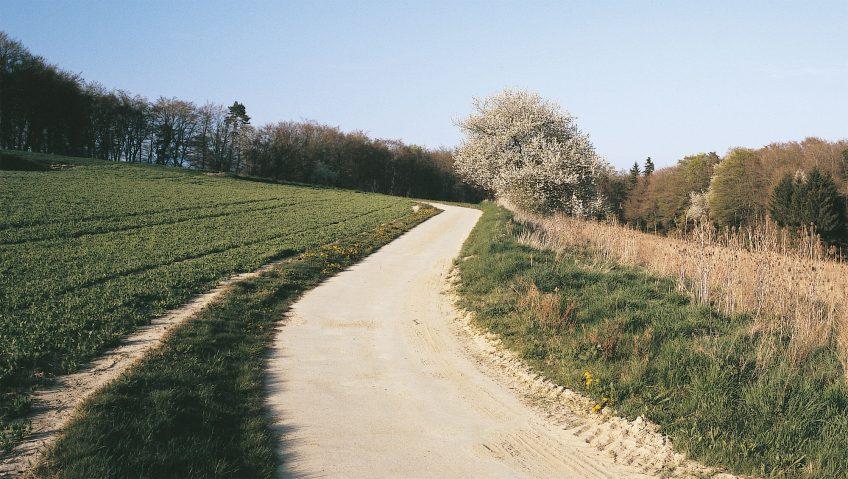 Balade d'avril avec les feuilles et les fleurs - La Salamandre sentier