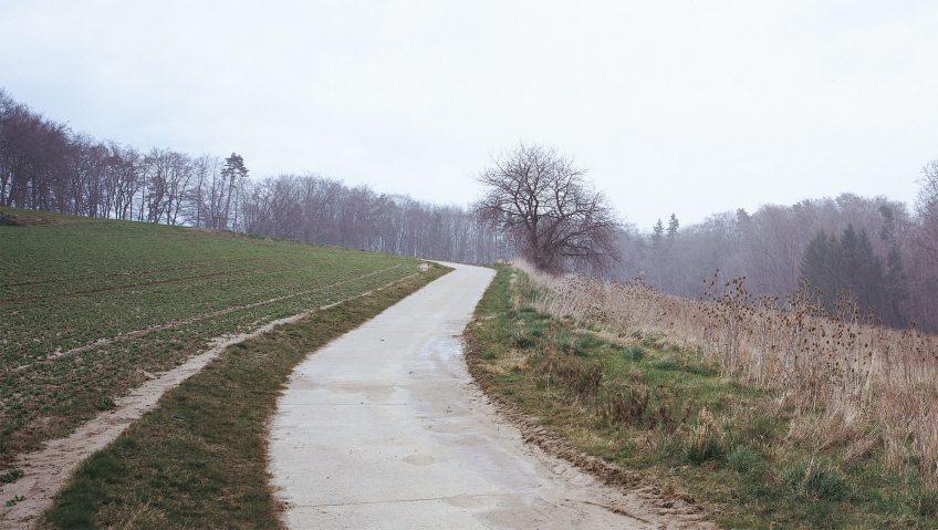 Balade de mars, coup de froid - La Salamandre sentier nature arbre