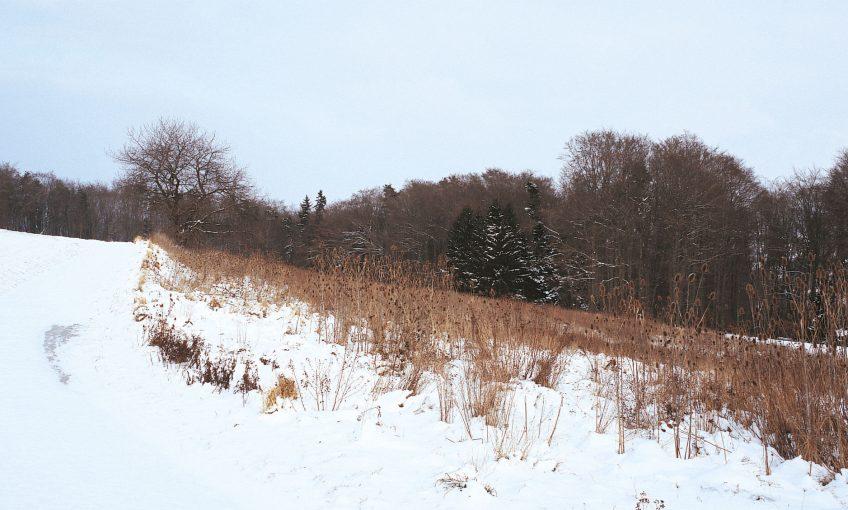 Balade de janvier, au début était le vent - La Salamandre