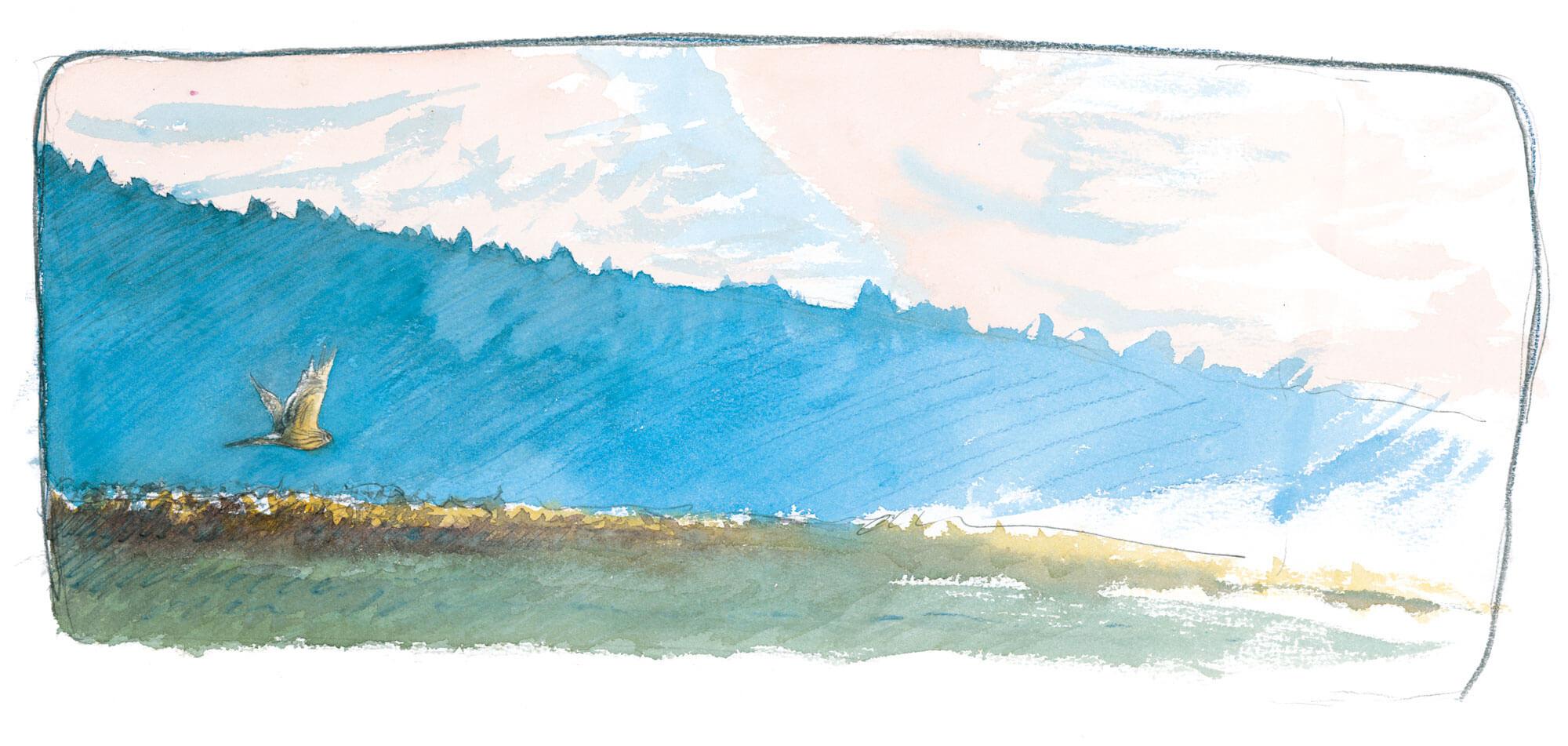Balade de décembre, au douxième matin - La Salamandre dessin busard