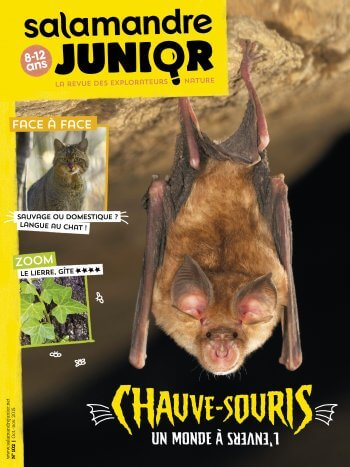 Couverture de La Salamandre Junior n°102