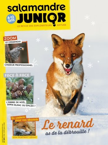 Couverture de La Salamandre Junior n°103
