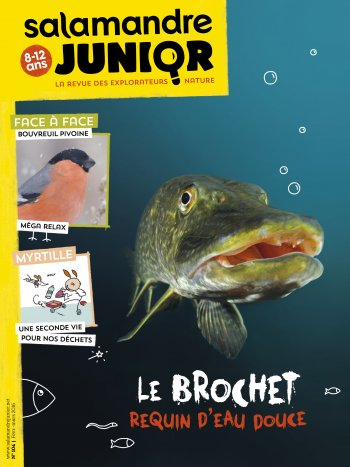 Couverture de La Salamandre Junior n°104