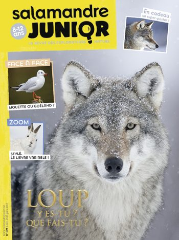 Couverture de La Salamandre Junior n°109