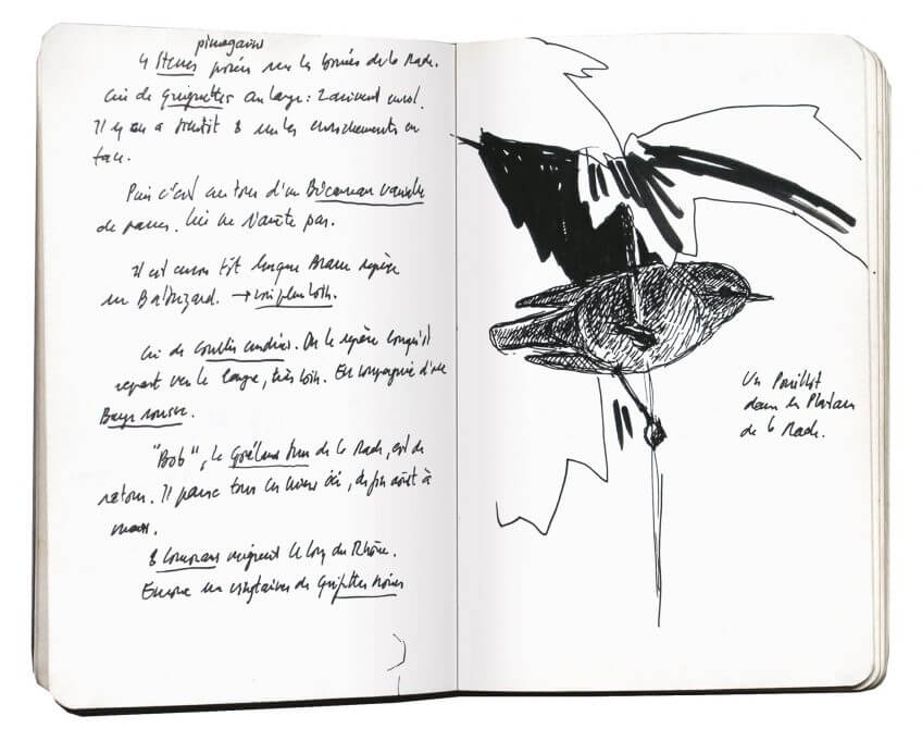 Première étape d'un voyage en suivant les oiseaux migrateurs - La Salamandre carnet route dessin oiseau