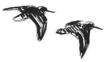 Première étape d'un voyage en suivant les oiseaux migrateurs - La Salamandre dessin oiseau
