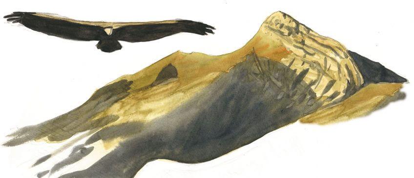 Deuxième étape d'un voyage en suivant les oiseaux migrateurs - La Salamandre dessin