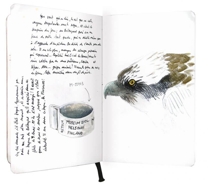 Septième étape d'un voyage en suivant les oiseaux migrateurs - La Salamandre dessin carnet route