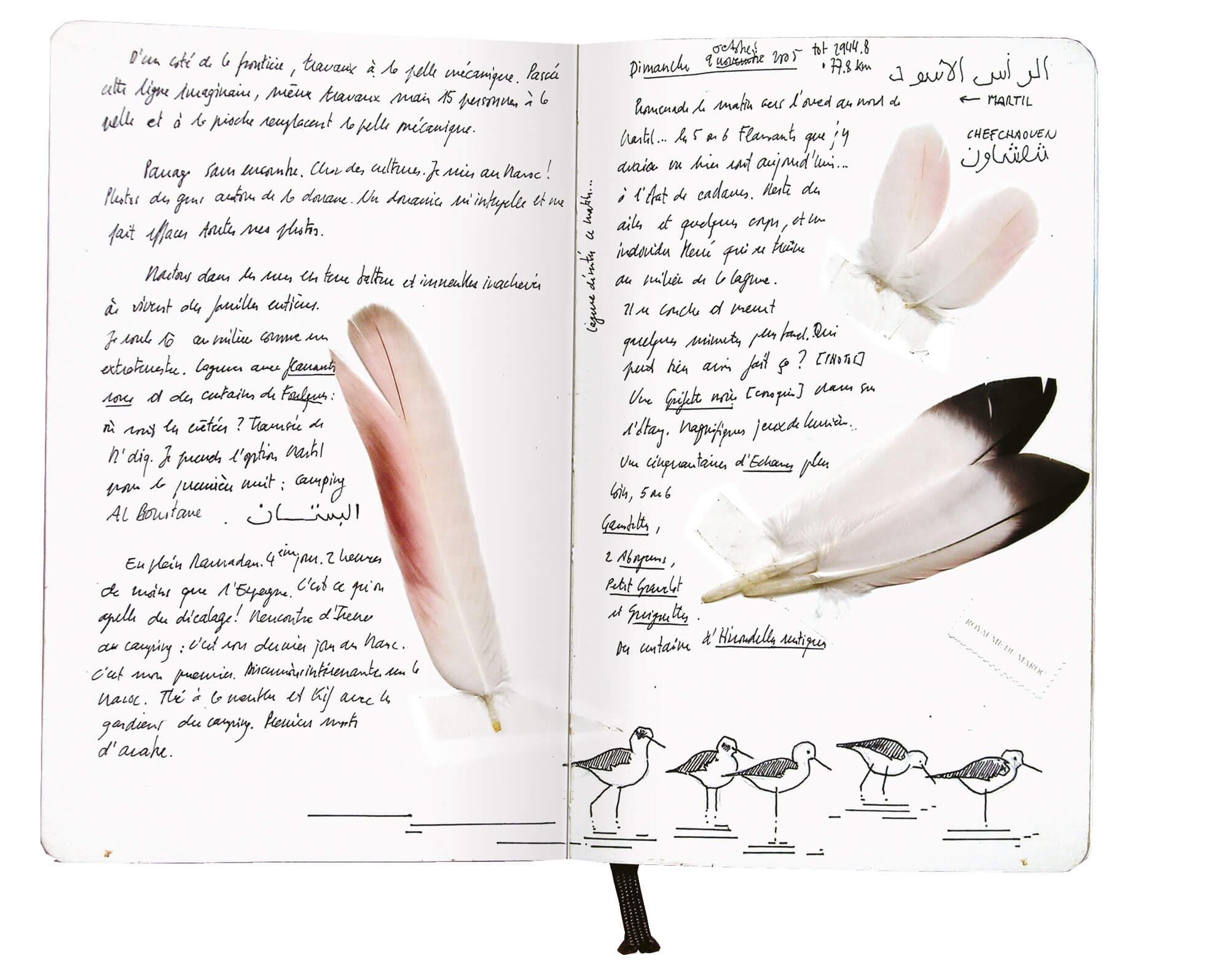 Troisième étape d'un voyage en suivant les oiseaux migrateurs - La Salamandre dessin carnet route plume