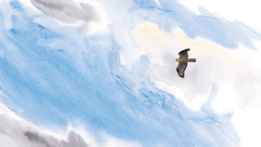 dessin rapace Deuxième étape d'un voyage en suivant les oiseaux migrateurs - La Salamandre