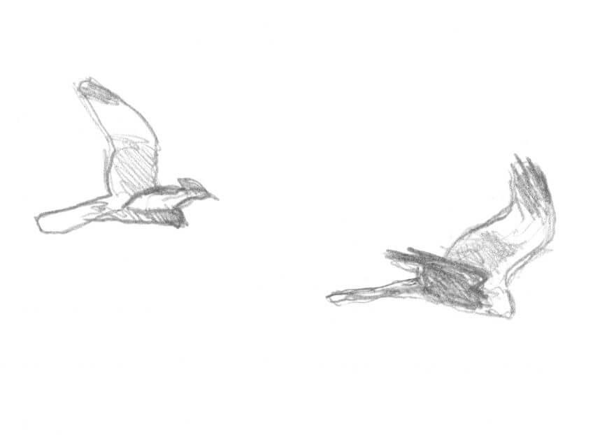 Deuxième étape d'un voyage en suivant les oiseaux migrateurs - La Salamandre oiseau dessin