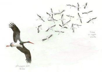 dessin-#6-cigognes