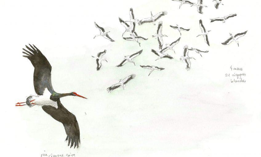 Cigognes dans le vent - La Salamandre