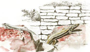dessin-#8-lézards-v2