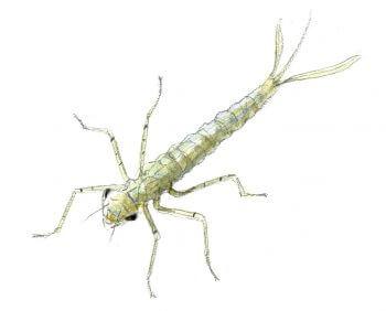 Fabriquez un aquascope - La Salamandre bricolage mare dessin libellule larve