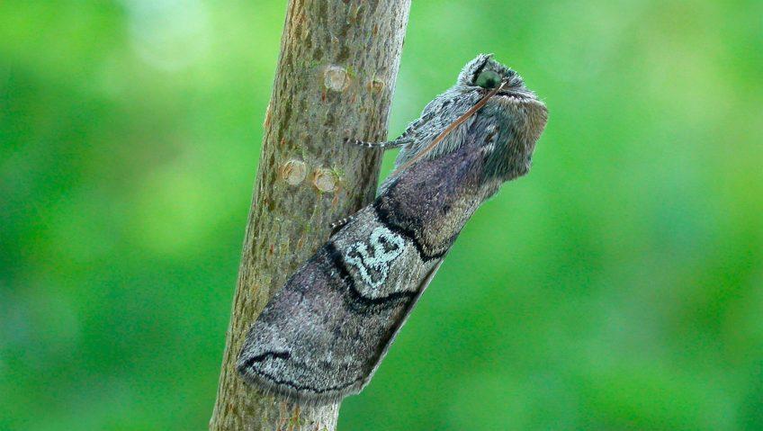 Inventaire des papillons de nuit de son jardin - La Salamandre branche