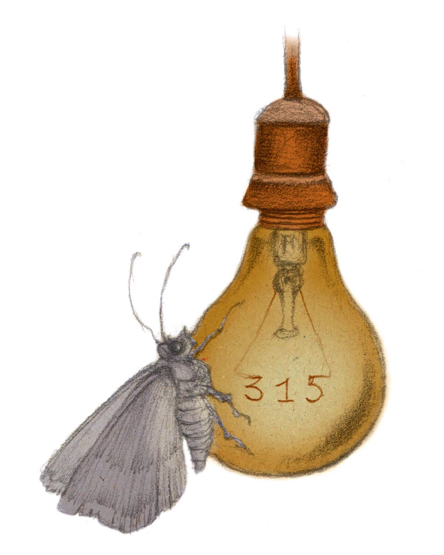 Inventaire des papillons de nuit de son jardin - La Salamandre dessin ambroise heritier