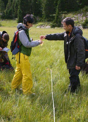 Dix mille saxifrages oeil-de-bouc pour les tourbières - La Salamandre