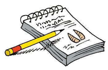 Bien préparer mon premier affût à chevreuil - La Salamandre dessin carnet crayon