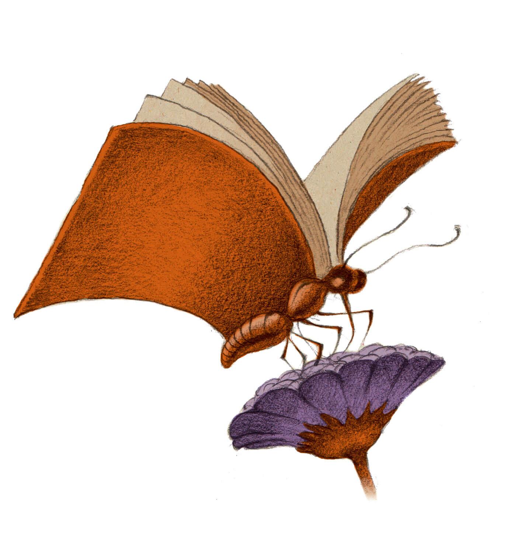 Les papillons du Jura dans un livre - La Salamandre dessin ambroise heritier