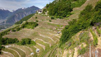 Vignoble en terrasses au-dessus de Branson en Valais
