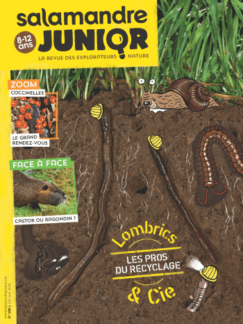 Couverture de La Salamandre Junior n°108