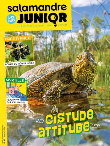 Couverture de La Salamandre Junior n°107