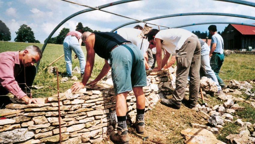 Relève bienvenue pour les murs de pierre- La Salamandre benevole