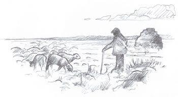 A l'abri des cabanes de pierres - La Salamandre dessin berger