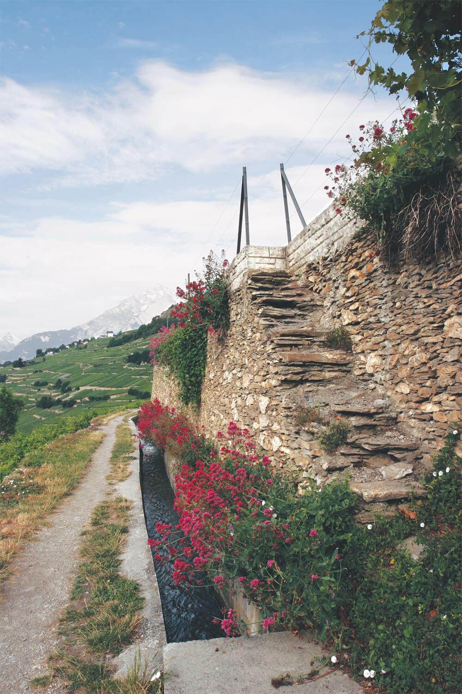 Soutenir les vignes - La Salamandre murs fleur