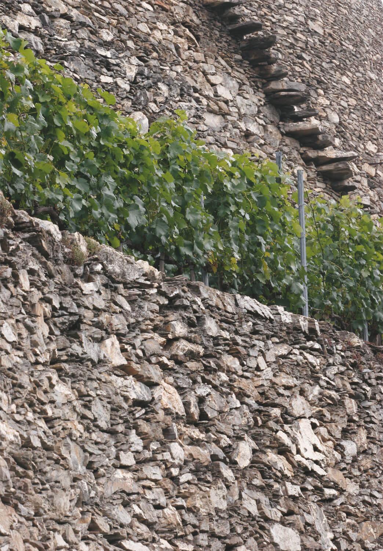 Soutenir les vignes - La Salamandre mur pierre