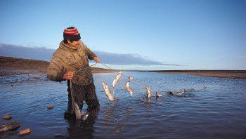 Des filets pour pêcher dans les…