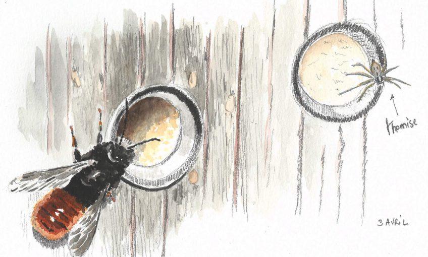 L'abeille osmie et l'araignée tueuse - La Salamandre