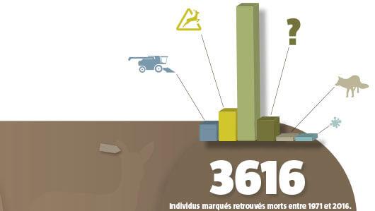 Des chevreuils étiquettés au berceau - La Salamandre infographie chevreuil