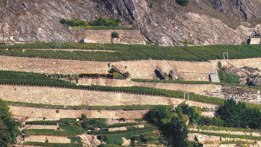 Soutenir les vignes - La Salamandre mur terrasse