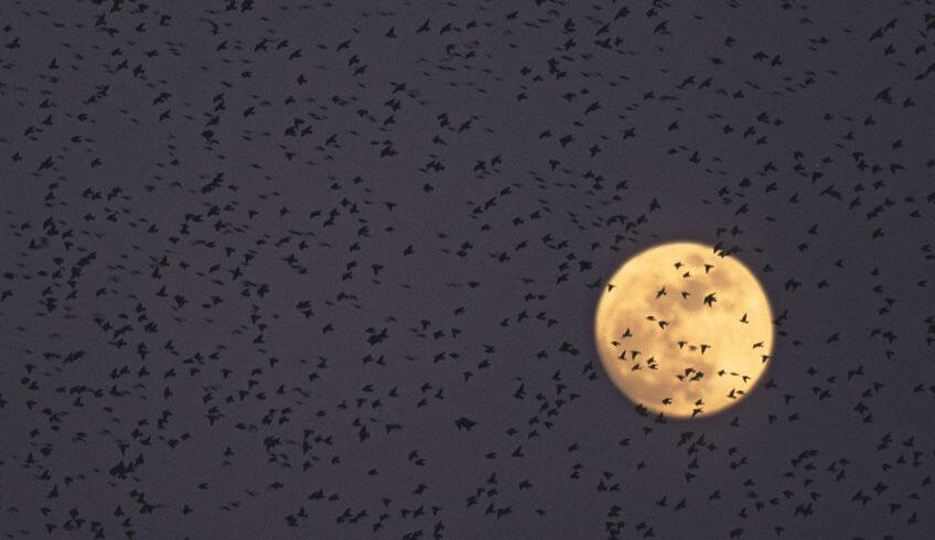 Migration, mode d'emploi - La Salamandre oiseau lune