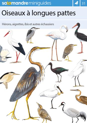 Miniguide 31 : Oiseaux à longues pattes