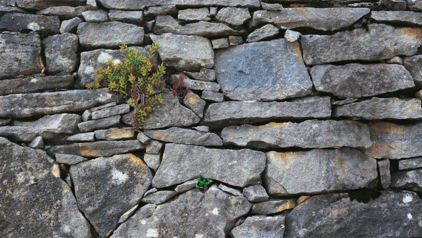 Murmure de pierre, bilan sur les murs de pierre - La Salamandre