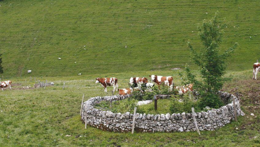 Les murs de pierres du canton de Vaud, des limites si claires - La Salamandre vache puit