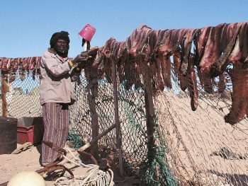 Danger climat pour les migrateurs - La Salamandre pêcheur