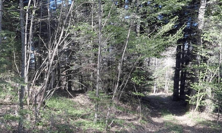 A la recherche du nid de Milou, le milan noir géolocalisé - La Salamandre foret