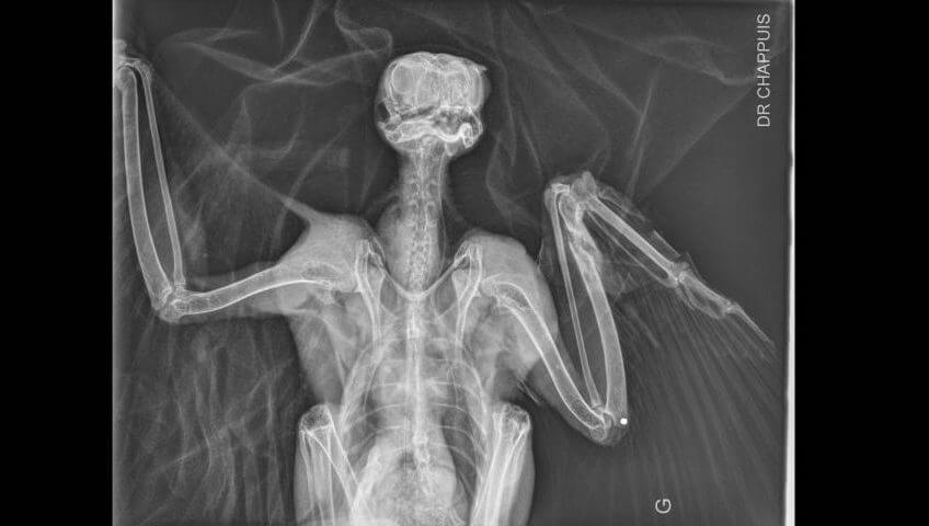 L'impression 3D au secours des oiseaux - La Salamandre radiographie