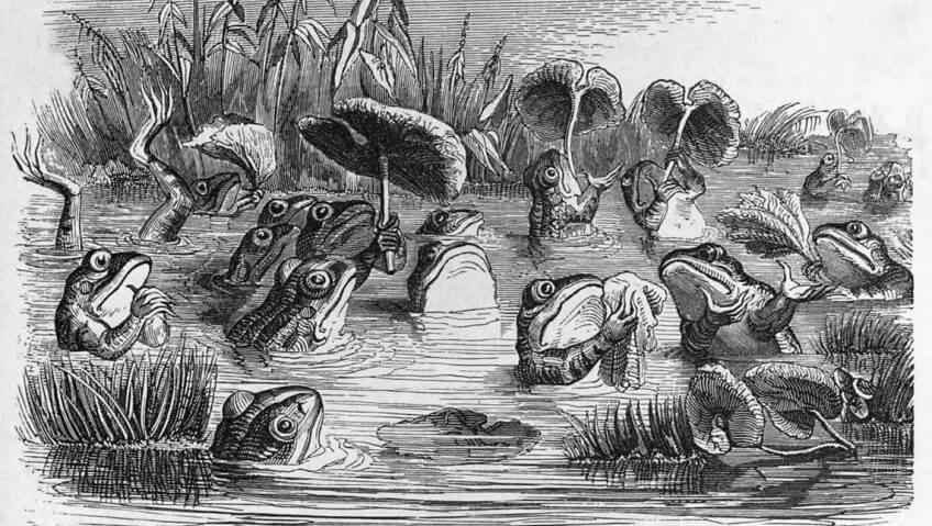 Ces fables qui font parler les animaux - La Salamandre dessin lievre micro
