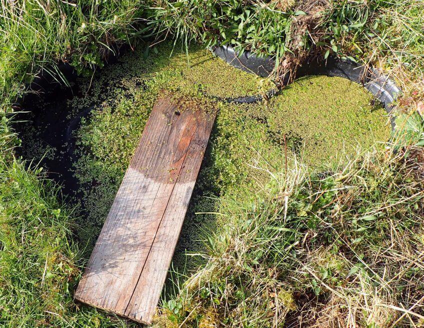 Comment construire un abreuvoir au jardin - La Salamandre