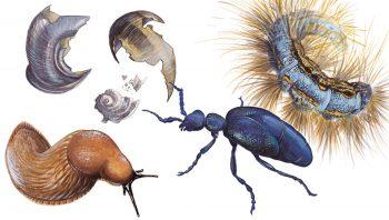 Chenille, escargots, limaces et scarabée sont…