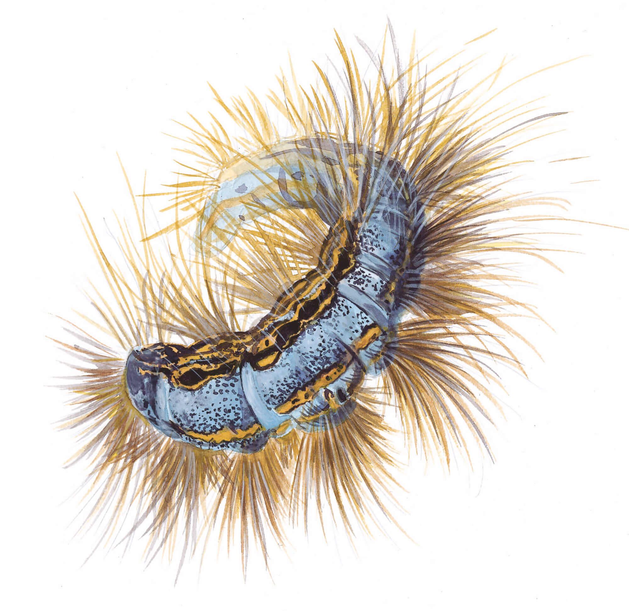 Service de nuit pour le hérisson - La Salamandre dessin
