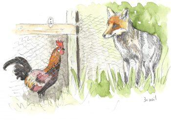 dessin-#14-coq-renard