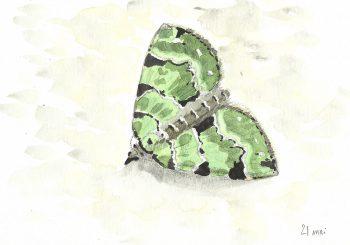 dessin-#17-papillon-cidarie
