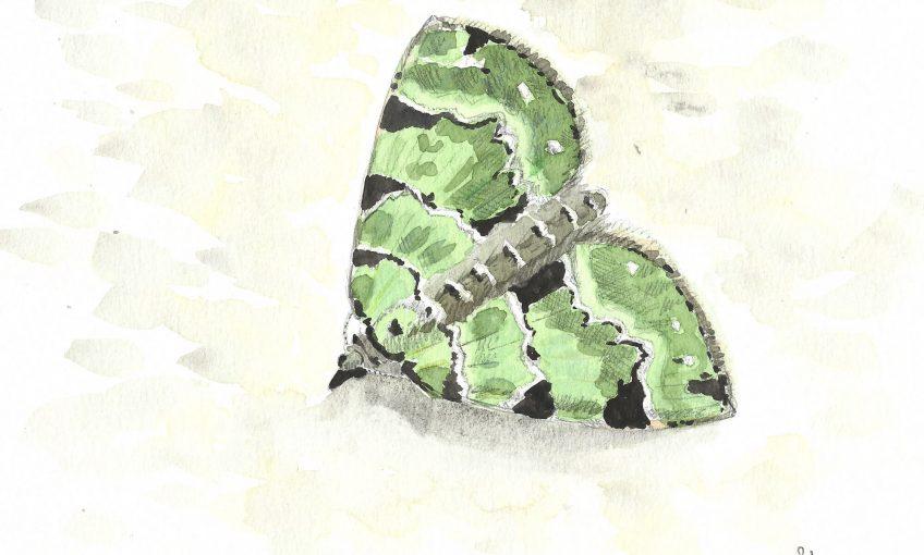 Face au papillon inconnu - La Salamandre