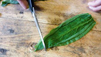 Cuisinez du poisson végétal avec la consoude officinale - La Salamandre